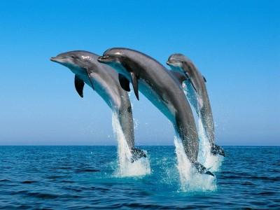 Dolphin Cove, Ocho Rios, Saint Ann, Jamaica